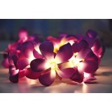 Frangipani lights - Purple