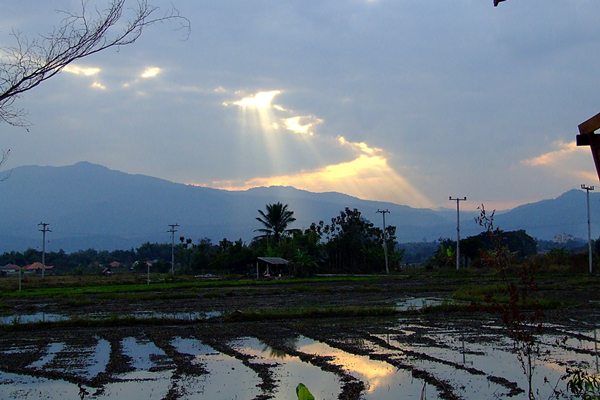 thai-market-chiang-mai-rice-fields